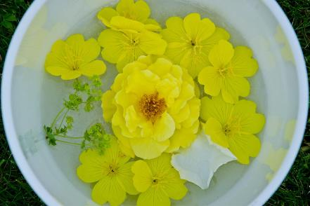 Image of Yellow flowers and citrine in quarz singing bowl